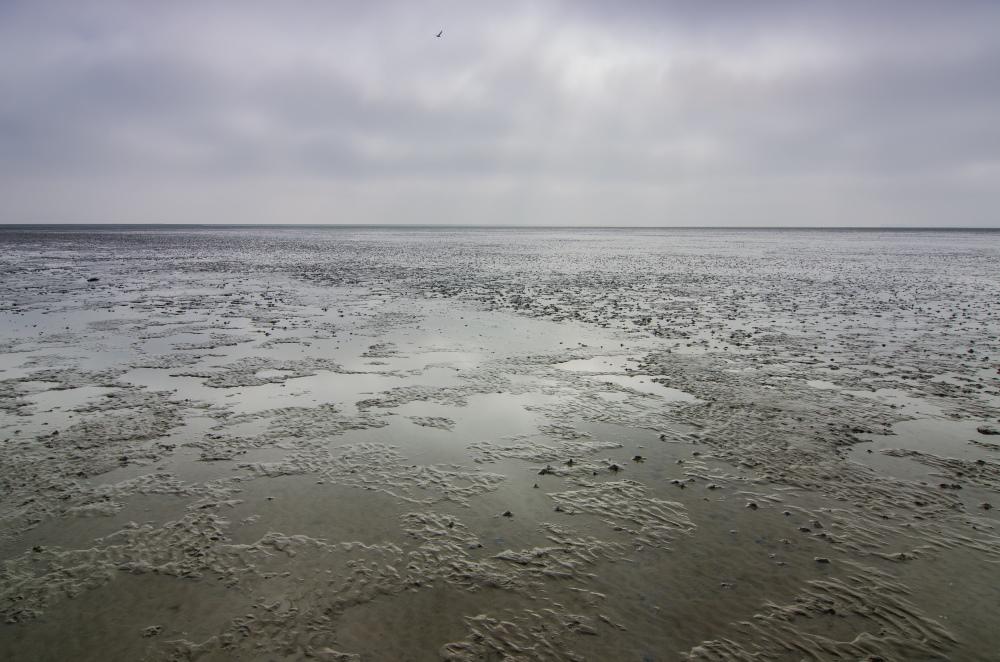 Nach diesem intensiven und gut geführten Fotoausflug verbinde ich das Wattenmeer mit folgenden Atributten: Weit,abwechslungsreich,schön und verletzlich aber auch fordernd, nberechenbar und im steten Wandel. Vielen herzlichen Dank an Martin für die tollen Einbilcke.