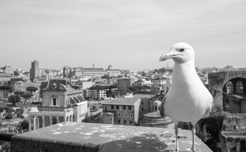 Rom hat mehr als einen Vogel…