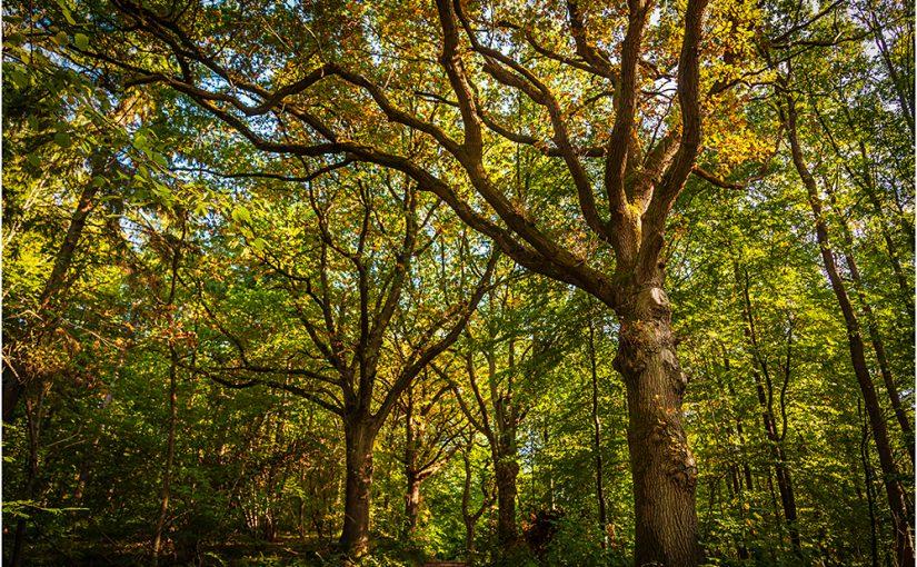 Herbstwald – so schön